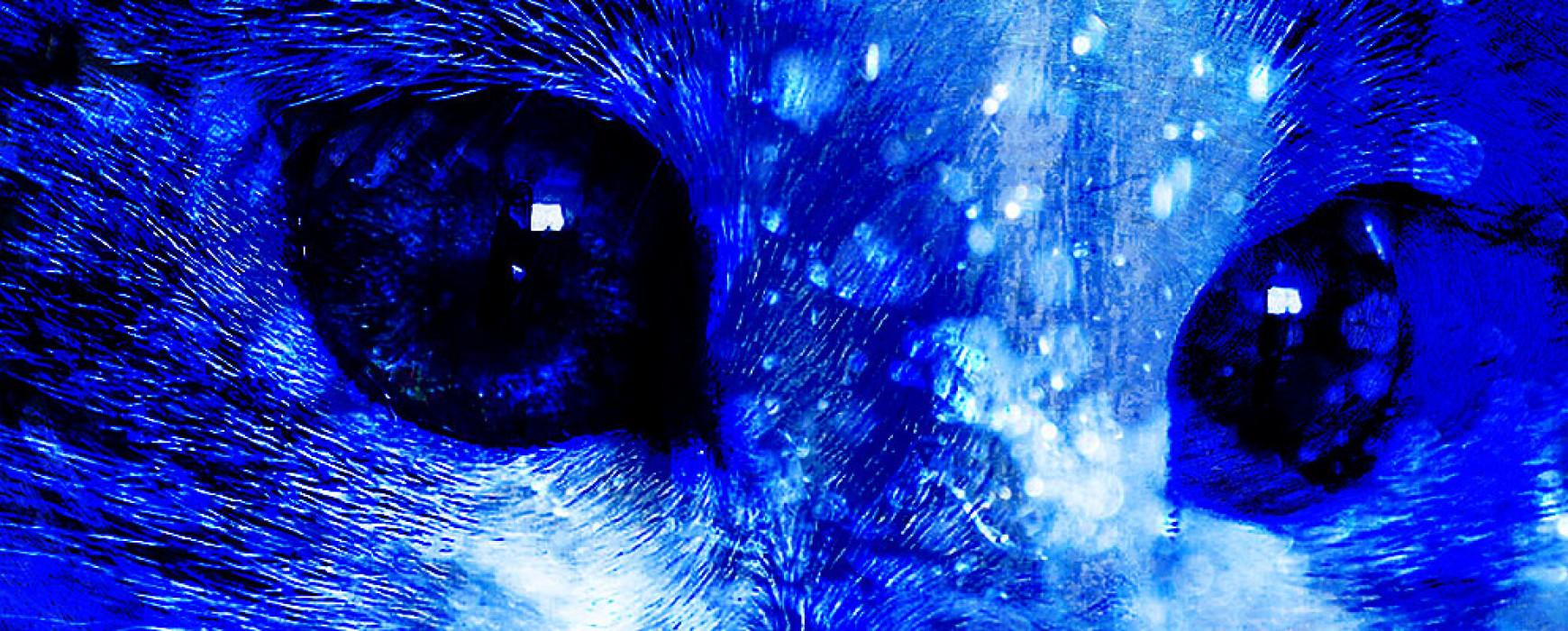 Diseño Web en Mallorca para Veterinarios: Crear Página Web Cuidado de Mascotas, Tienda o Clínica Veterinaria en Mallorca